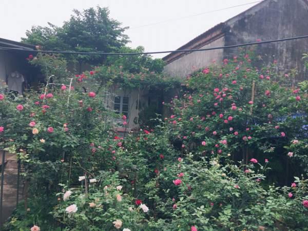 Ngỡ ngàng với ngôi nhà hoa hồng đẹp như cổ tích của ông bố trẻ ở Hưng Yên 6