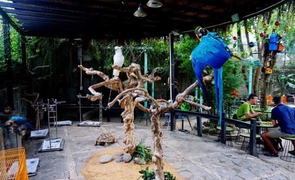 Thích thú với quán cà phê nuôi đầy vẹt ở Sài Gòn 1