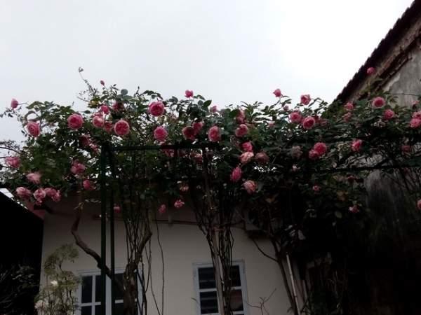 Ngỡ ngàng với ngôi nhà hoa hồng đẹp như cổ tích của ông bố trẻ ở Hưng Yên 4
