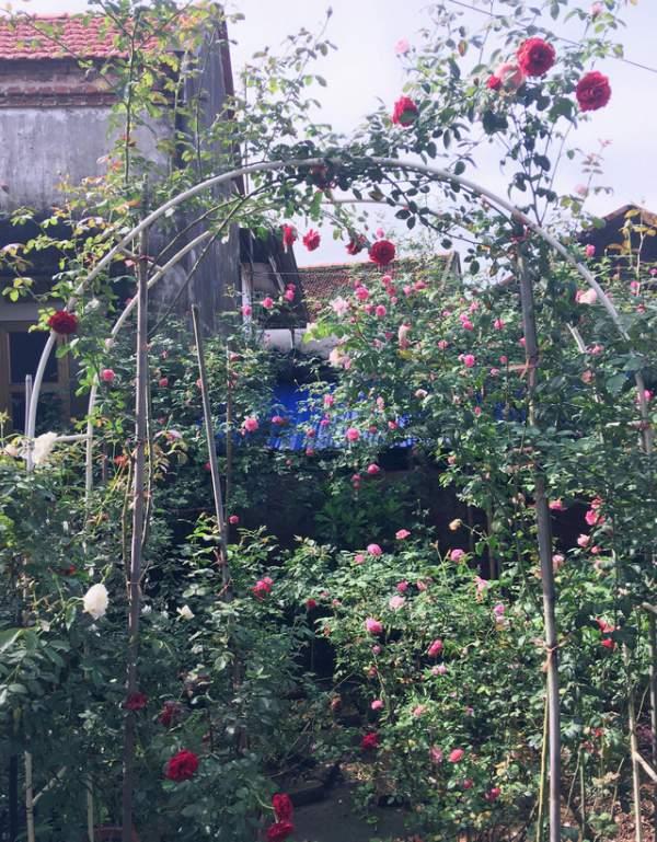 Ngỡ ngàng với ngôi nhà hoa hồng đẹp như cổ tích của ông bố trẻ ở Hưng Yên 7