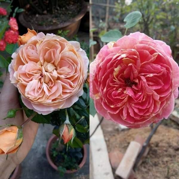 Ngỡ ngàng với ngôi nhà hoa hồng đẹp như cổ tích của ông bố trẻ ở Hưng Yên 9
