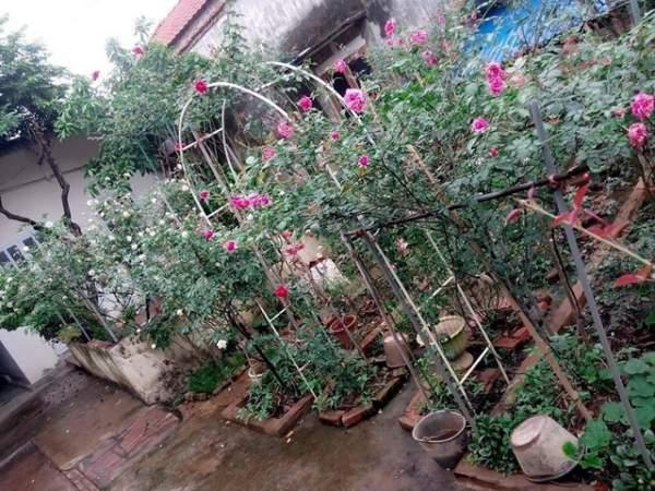 Ngỡ ngàng với ngôi nhà hoa hồng đẹp như cổ tích của ông bố trẻ ở Hưng Yên 1