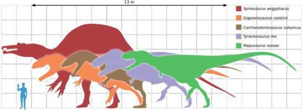 Tại sao khủng long thống trị Trái đất hơn 100 triệu năm lại không sinh ra trí tuệ như loài người? 2